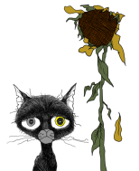 Cat Haee with sunflower